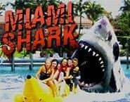 Requin de Miami